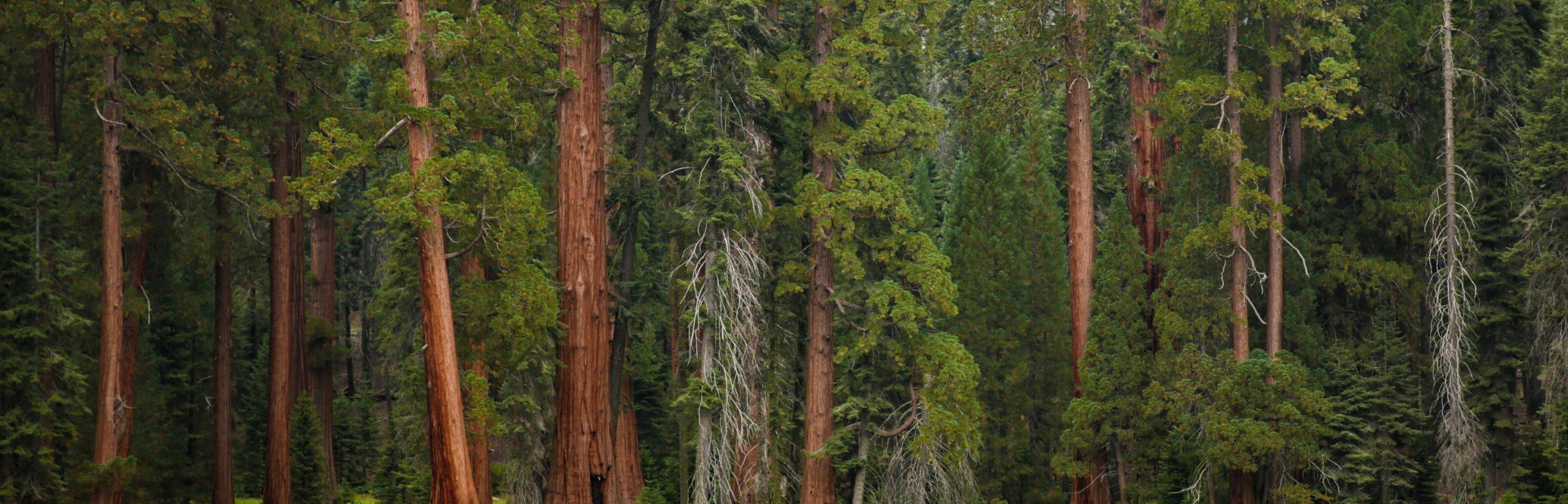 Climbing 100 Trees